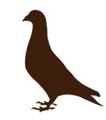 UFSS_pigeon