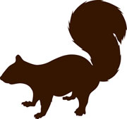 UFSS_squirrel