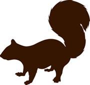 UFSS_squirrel